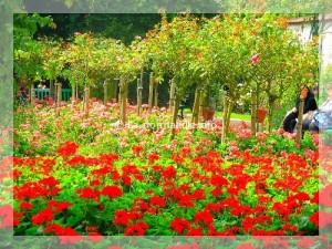 jardins-normandie_011-300x225 Giverny France dans Eure 27